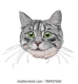 Cat Face With Long Whiskers Isolated On White Background Cute Kitty Head Hand Drawn Illustration