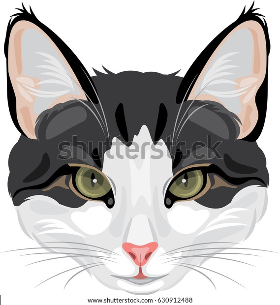 cat-head-isolated-on-white-600w-63091248