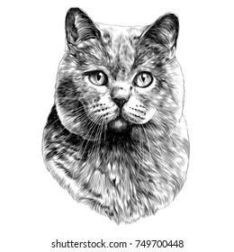 cat sketch images stock photos vectors shutterstock