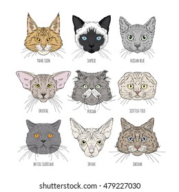 cat heads set of different breads
