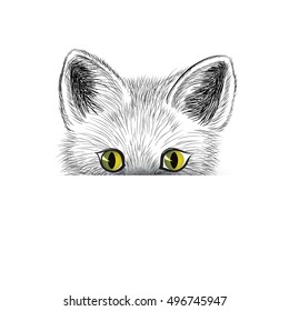 Cat. Kitten face sketch. Cat isolated. Cat head icon looking at camera. Puppy cat illustration