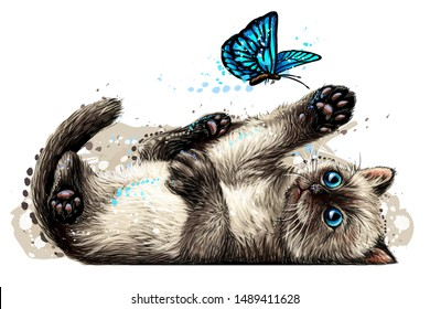 Cat. A kitten is playing with a butterfly. Wall sticker with the image of a blue-eyed kitten catching a butterfly in a watercolor style.