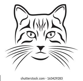Cat on white background