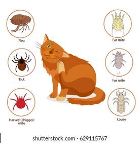 Cat Parasites. Pet Skin And Fur Parasites Vector. Flea, Tick, Ear Mite, Fur Mite, Harvest Mite, Louse. Veterinary Medicine Vector.