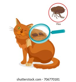 Cat Parasites. Tick On Cat In The Fur As A Close Up Magnification Vector. Spread Of Infection. Pet Veterinary Medicine Vector.