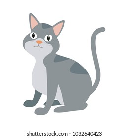 Cat pet cartoon
