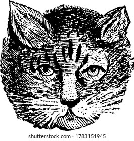 The cat is a small domesticated carnivorous mammal, vintage line drawing or engraving illustration.