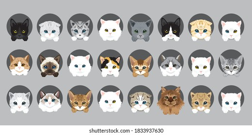 Cat vector breeds cute pet animal set illustration. Different type of vector cats