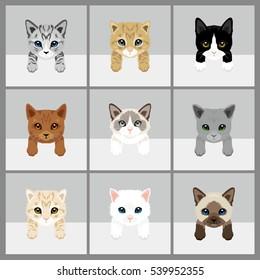 Cat Vector Illustration. 9 set