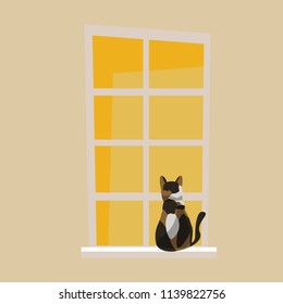 cat and window vector illustration