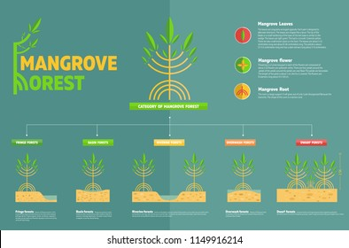 category of mangroves concept for Education about mangrove forest.vector,infographic