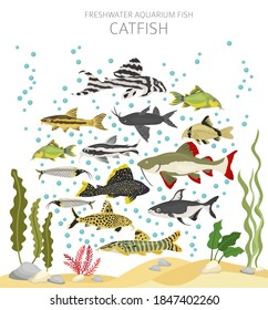 Catfish. Freshwater aquarium fish icon set flat style isolated on white.  Vector illustration
