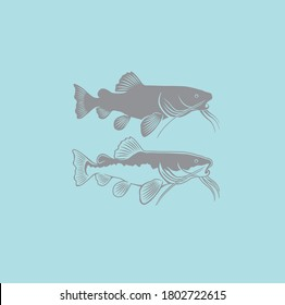 Catfish. Vector illustration  that allows the image to be used in small sizes (in packaging design, decoration, educational graphics, etc.)