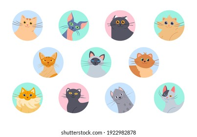 Cats avatars. Funny kittens of various breeds, user profile images. Isolated domestic cat vector set. Happy pet character heads with smiling faces in circles isolated on white, funny feline