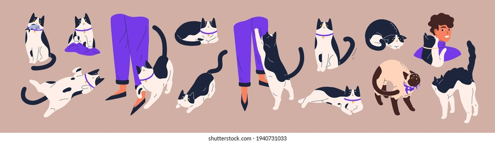 Cat's body language. Feline behavior and feelings. Cute pets with angry, friendly, calm, playful and scared emotions. Kittens relaxing, asking for food and lying belly up. Flat vector illustration