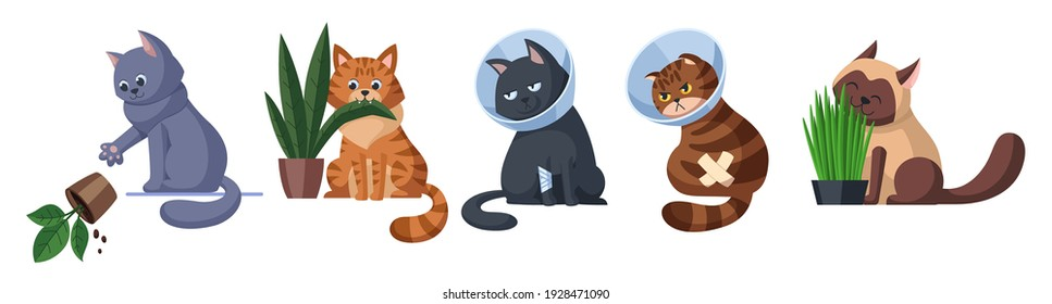 Cats in different situations set. Cat throws off the plant. Cat is eating a plant. Two cats in Elizabethan collars. Cat eats sprouted oats. Pet care concept illustration. Isolated on white background.