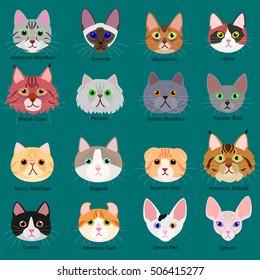 Cat Breed Images Stock Photos Vectors Shutterstock