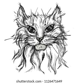 The cat's head is painted white and gray. Head of a furry cat on a white background. A painted portrait of a cute cat. An animal, a kitten, a draft of domestic animals. vector illustration Cat tattoo.