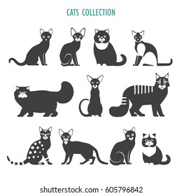 Cats icons collection. Vector collection of different cats breeds - havana brown,  British Shorthair, Siamese, Maine Coon, Persian, Bengal, Abyssinian, Russian Blue, Exotic, isolated on white.