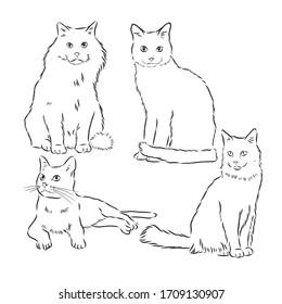 Cats set, vector illustration, hand-drawn cute fluffy cats. domestic cat set vector sketch illustration