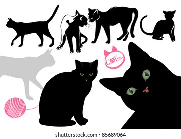 Cats.Cats.Cat's life background