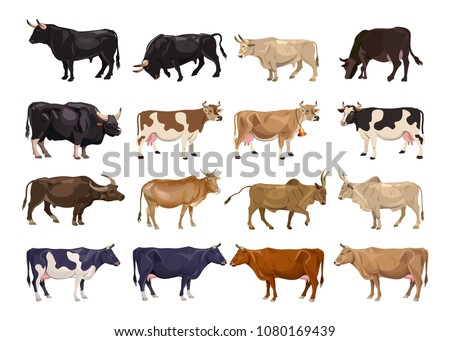 Cattle breeding set Cows