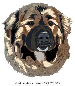 Caucasian Shepherd Dog. Vector drawing.
