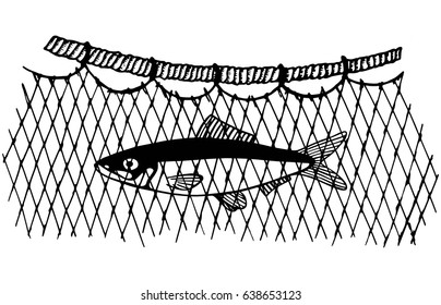 The caught commercial fish in the network is caught. Vector illustration hand drawing