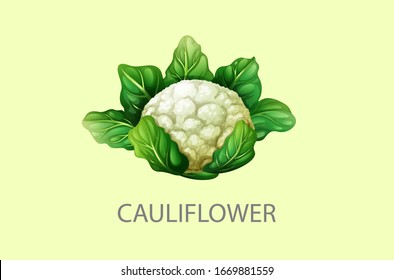Cauliflower, half cauliflower vector, Fresh white cauliflower with green leaves, Cauliflower isolated on white background, Collection, Group of cauliflowers with green leaves