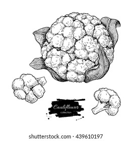 Cauliflower hand drawn vector illustration. Vegetable engraved style illustration. Isolated Cauliflower with pieces. Detailed vegetarian food drawing. Farm market product.