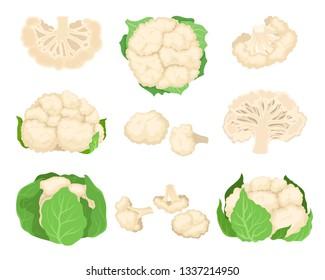 Cauliflower set. Organic food concept. Vector illustration.