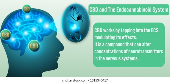 CBD and The Endocannabinoid System background.Vector illustration