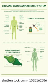 CBD and Endocannabinoid System vertical infographic illustration about cannabis as herbal alternative medicine and chemical therapy, healthcare and medical science vector.