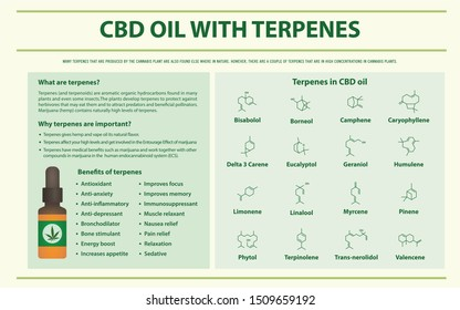 CBD Oil with Terpenes horizontal infographic illustration about cannabis as herbal alternative medicine and chemical therapy, healthcare and medical science vector.
