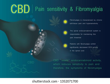 cbd pain sensitivity and fibromyalgia,the  endocannabinoid system,effect on body,vector infographic on white background.