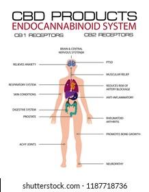 cbd products endocannabinoid system