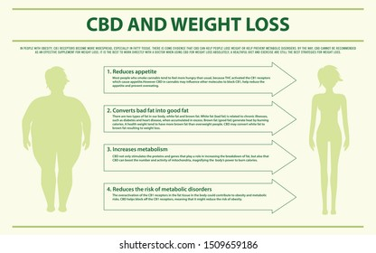 CBD and Weight Loss horizontal infographic illustration about cannabis as herbal alternative medicine and chemical therapy, healthcare and medical science vector.