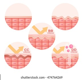 cc , bb , dd cream and skin anatomy vector , icon and logo