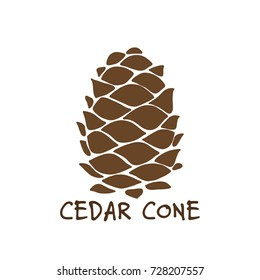 Cedar cone, sketch for your design