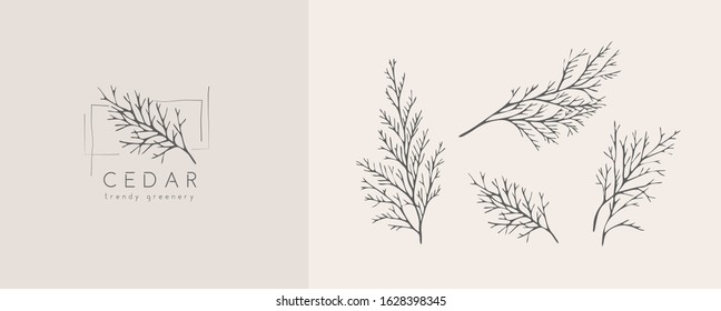 Cedar logo and branch. Hand drawn wedding herb, plant and monogram with elegant leaves for invitation save the date card design. Botanical rustic trendy greenery vector illustration