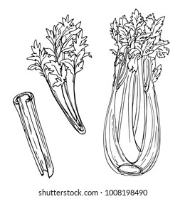 Celery drawn by a line on a white background. A sketch of food. Vector drawing of spices