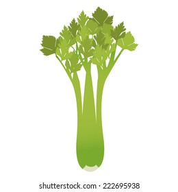 Celery. Celery isolated on a white background.
