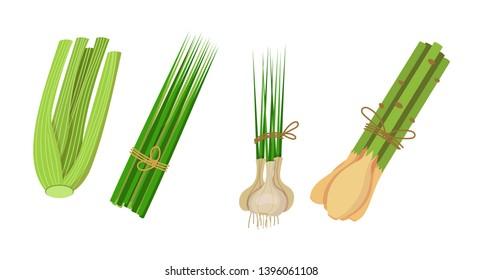 List of Medicine Herbs Images, Stock Photos & Vectors