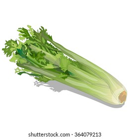 Celery vector collection isolated on white background