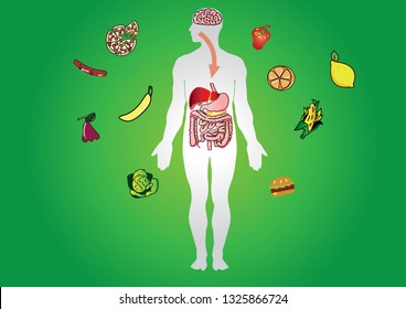Cellular respiration in mitochondria is a set of metabolic reactions for take place in the cells of organisms to convert biochemical energy from food and other nutrients. Digestive system vector
