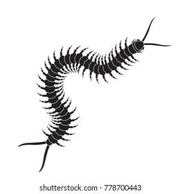 Centipede icon. Realistic centipede vector.