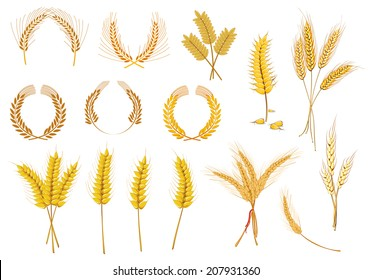 Cereal ears and grains set for agriculture industry or logo design