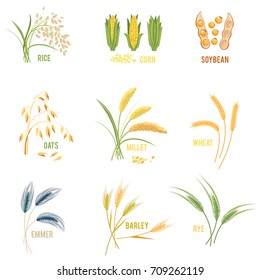Cereal Plants vector icons illustrations. Isolated symbols of wheat and rye ears, seeds and oat or barley millet with rice sheaf. Concept for organic products label, harvest and farming, grain, bakery