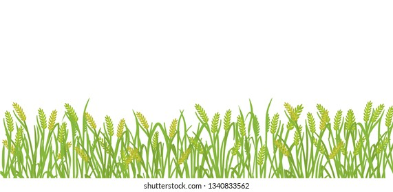 Cereal rye field banner background. Green agricultural plant grass. Barley vector illustration. Agricultural wheat or harvest.