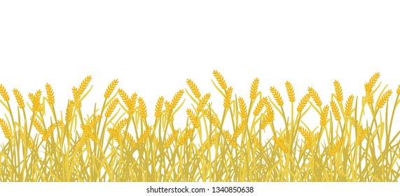 Cereal rye field banner background. Yellow gold autumn agricultural plant grass. Barley vector illustration. Agricultural wheat harvest.